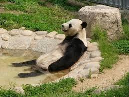 パンダの半身浴w