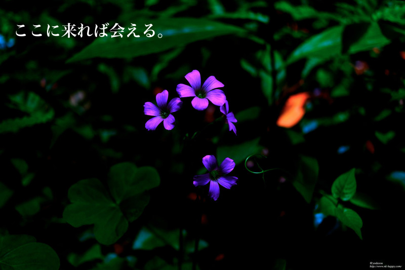 DSCF2492_Fotor