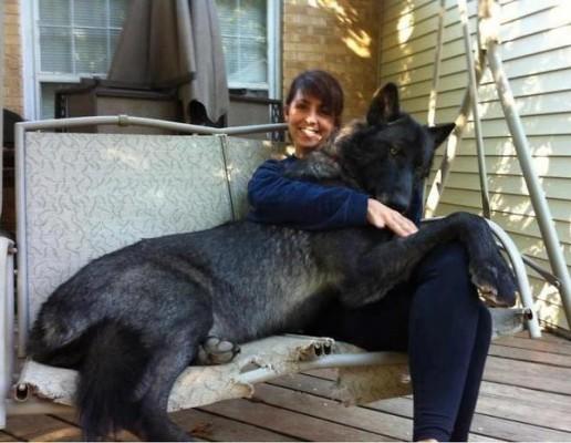 a.baa-One-very-big-dog