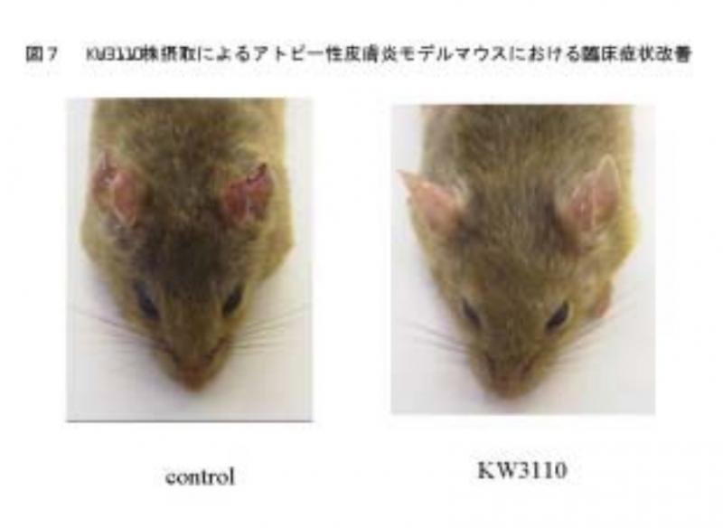 出典:抗アレルギー効果のある乳酸菌 KW3110 株の発見と活用