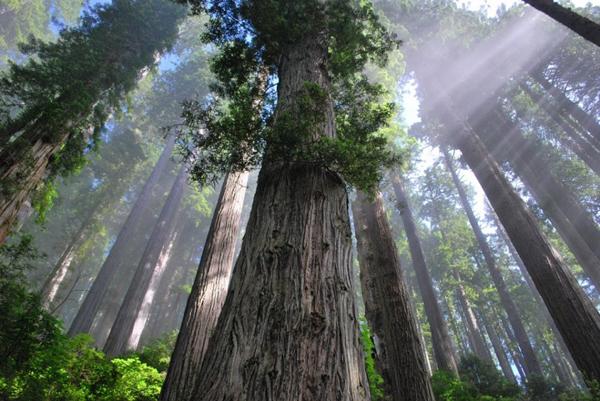 ヨセミテ国立公園の画像 p1_14