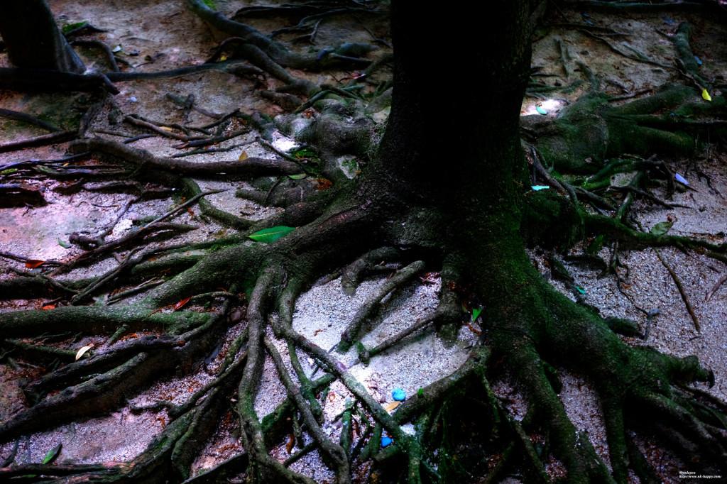 木の幹根本