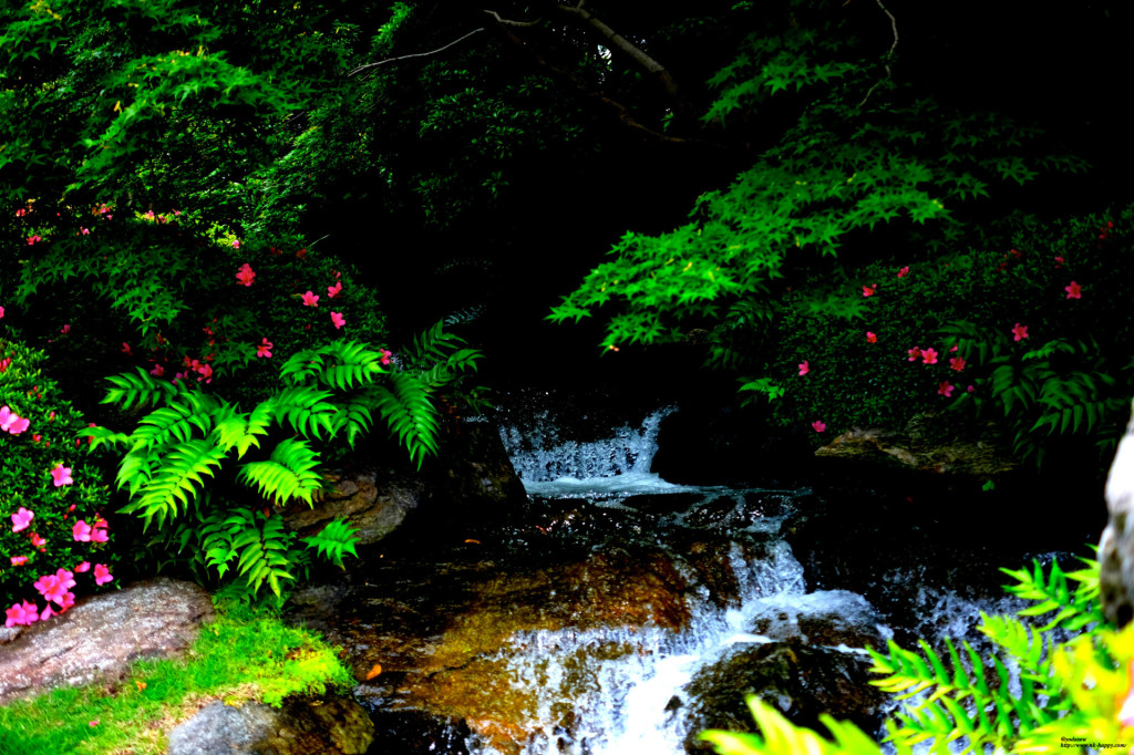 森のなかの滝
