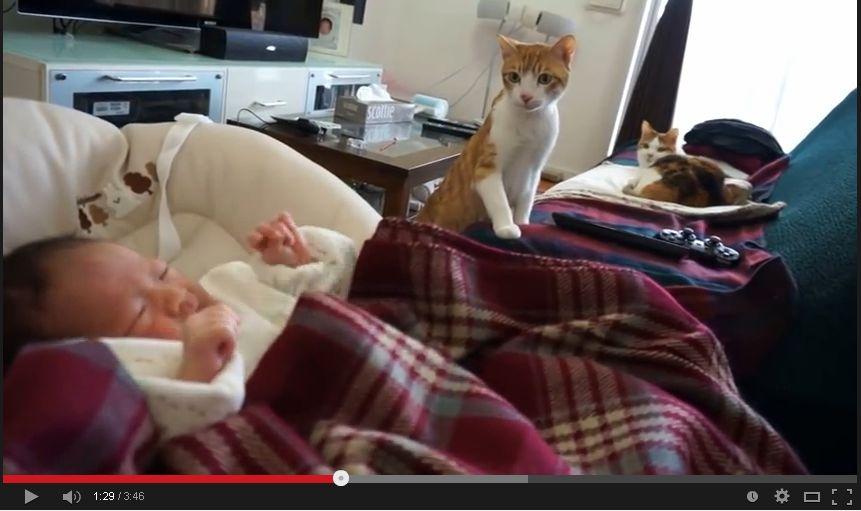猫が赤ちゃんと初対面。興味津々な様子。