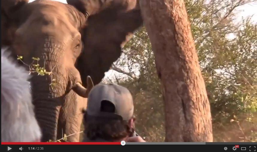 【神対応】アフリカゾウが迫ってきた時のガイドの行動
