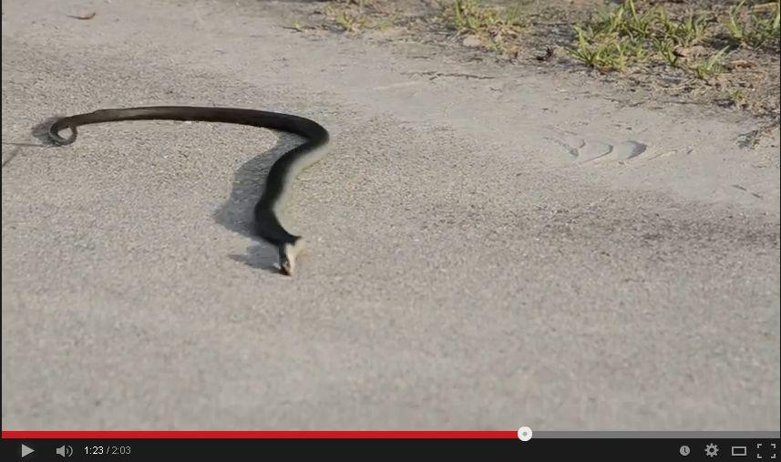 LSDを服用した蛇の動きがヤバい・・・