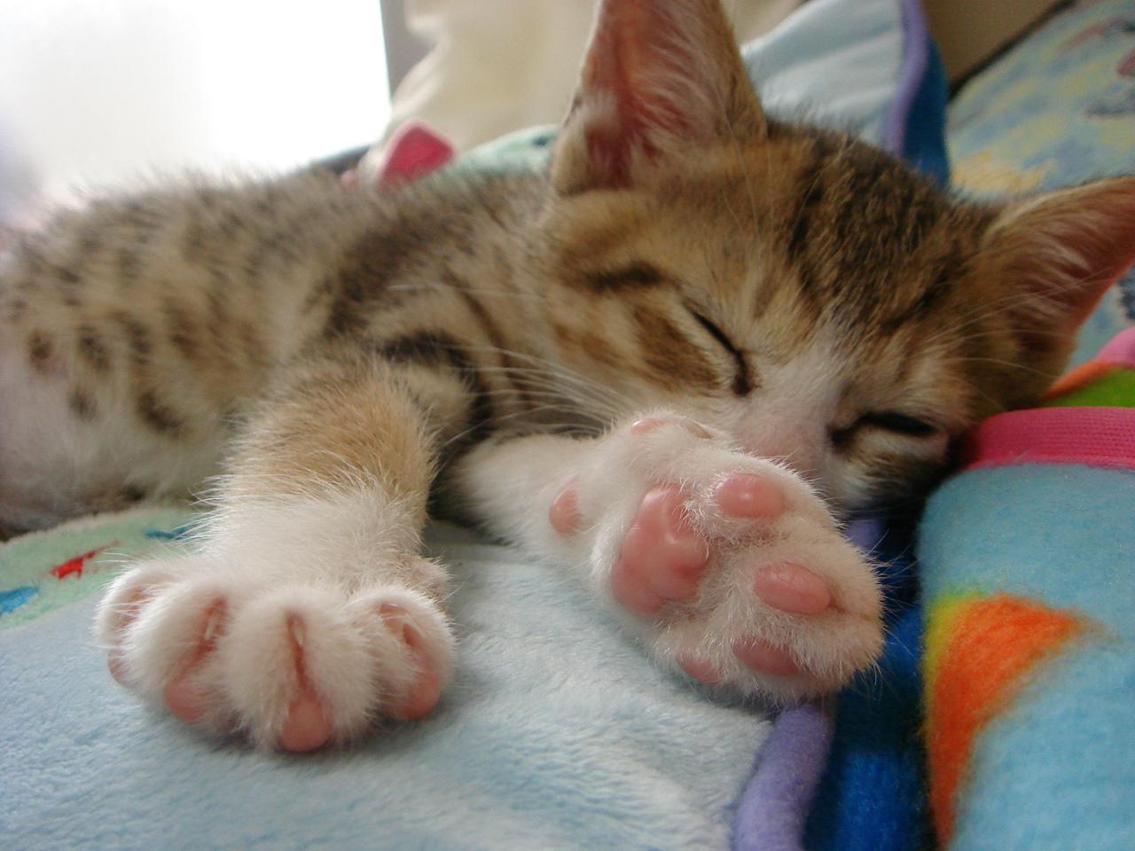 【画像】猫の肉球がテディベア風に!肉球を10倍可愛くする方法が楽しい!