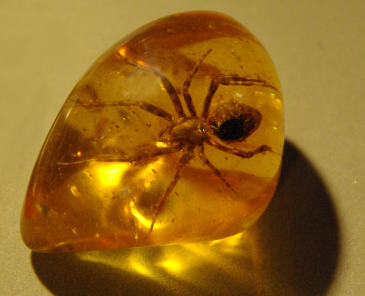 Spider_in_amber_(1)