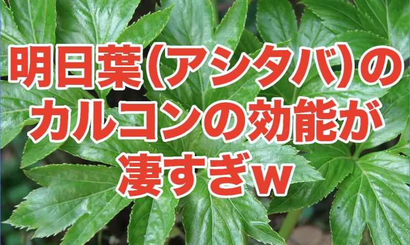 胃酸の出過ぎを抑える明日葉(アシタバ)のカルコンが凄い!東京離島の伊豆七島、小笠原諸島に生息