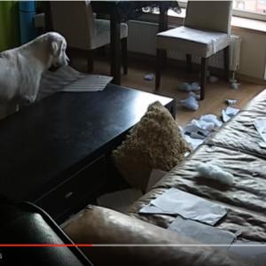 【動画】飼い主が外出中にワンコがとった行動w飼い主唖然www