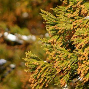 環境省が花粉症の治療法ガイドラインを公開。症状に合わせた薬と副作用